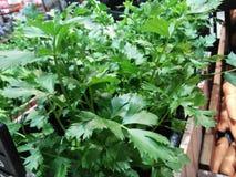 Anlagen, die als Gemüse und Bestandteile für das Kochen benutzt werden können stockbild