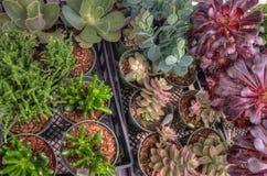 Anlagen, die in einem Garten-Center in Minnesota wachsen stockbilder