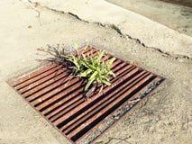 Anlagen, die im schmutzigen Abfluss heranwachsen Stockbilder