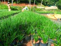 Anlagen in einem Garten Lizenzfreie Stockfotos