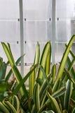 Anlagen in einem Gewächshaus eines botanischen Gartens in der Stadt von Valen Stockbilder