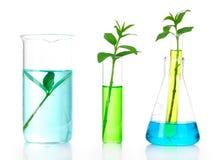 Anlagen in einem Reagenzglas Stockbild