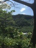 Anlagen in Hawaii Lizenzfreie Stockbilder