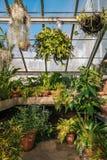 Anlagen im Gewächshaus an den Wellen-Hügel-allgemeinen Gärten, der Bronx, New York City lizenzfreie stockbilder