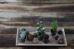 Anlagen im hölzernen Behälter für Innengarten- und Floristenkonzept Lizenzfreie Stockbilder