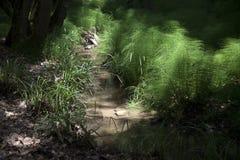 Anlagen im Wald Stockbild