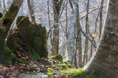 Anlagen im Wald lizenzfreie stockfotografie