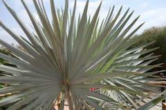 Anlagen in Marokko Palmen in Marokko Stockfotografie