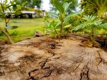 Anlagen sind auf Stümpfen im Garten wachsend Lizenzfreies Stockbild