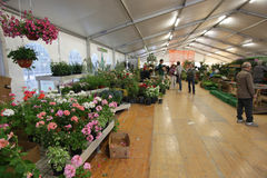 Anlagen und Blumen Stockfotografie