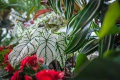 Anlagen und Blumen Lizenzfreie Stockfotos