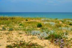 Anlagen und Blumen auf natürlichen Sanddünen (ein Lanzada, ein Galizien, ein Spanien) Lizenzfreie Stockfotografie