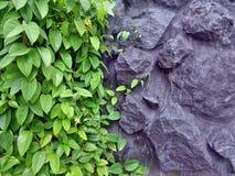 Anlagen und Felsen Lizenzfreies Stockbild