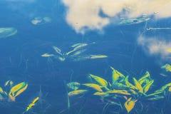 Anlagen versenkt in das ruhige Wasser stockfotos