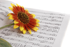 anmärkningar för blommamusikanteckningsböcker Royaltyfria Foton