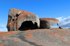 Anmärkningsvärt vaggar är en av de bästa bekanta symbolerna av känguruön fotografering för bildbyråer