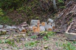Anmelden des Holzes Stockfotos