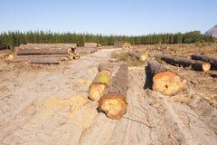 Anmelden eines Waldes lizenzfreies stockfoto