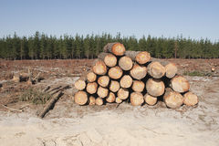 Anmelden eines Waldes stockbilder