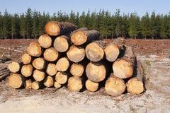 Anmelden eines Waldes stockfotografie