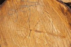 Anmelden eines Waldes lizenzfreies stockbild