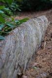 Anmeldung verdrehen ein Wald Lizenzfreie Stockfotos