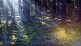 Anmerkungen und ein Baum in einem Mondschein Mystischer Wald nachts Dunkle Szene mit Mondlicht Stockfotografie
