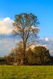 Annäherung des Herbstes Stockbilder