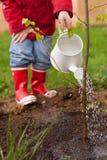 4 années de garçon dans des bottes d'une veste rouge, de blue-jean et en caoutchouc plante un arbre mince et l'arrose d'un Ca de  Images stock