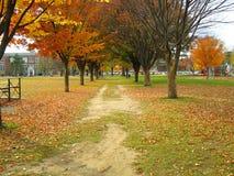 Ann Arbor bränner parken Arkivfoton