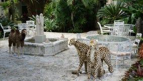 Ann Norton Sculpture Gardens em West Palm Beach, Florida Imagens de Stock Royalty Free