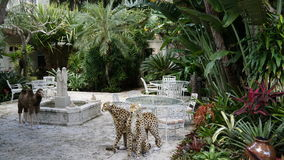 Ann Norton Sculpture Gardens i West Palm Beach, Florida royaltyfri fotografi