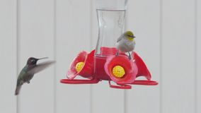 Bird and hummingbird on outdoor feeder together