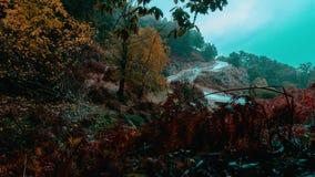 Annaba, Algérie, laps de temps de brouillard de matin de chemin forestier banque de vidéos