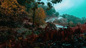 Annaba, Algeria, forest road morning fog time lapse stock footage