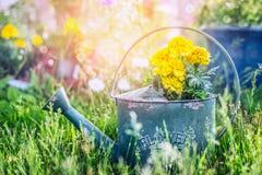 Annaffiatoio con i fiori in erba sopra il giardino soleggiato di estate fotografia stock
