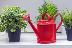 Annaffiatoio rosso per i fiori e le piante d'innaffiatura immagine stock