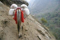 annapurna运载的驴重载 免版税库存照片