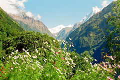 Annapurna Himalaya Mountains, Nepal. View of the Annapurna mountain ridge with flowers and mount Machhapuchhre and mount Dhaulagiri, Nepal royalty free stock images