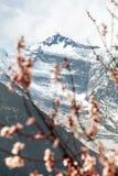 Annapurna II 2 with flowering apricot tree Stock Photos