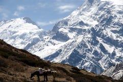 Annapurna - il Nepal Fotografia Stock