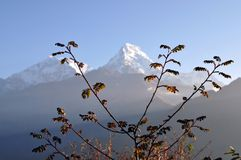 Annapurna massif. Nepal. The dawn. Removed from the height of 3200 meters Stock Photos