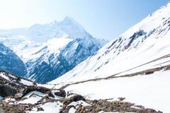 Annapurna podstawowy obóz Zdjęcia Royalty Free