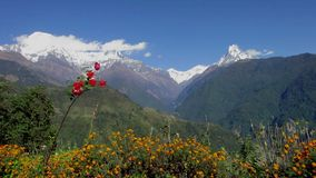 The Annapurna range in Nepal stock video footage