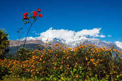 The Annapurna South and the Hiunchuli Royalty Free Stock Image