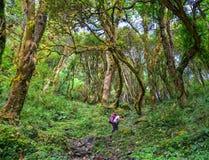 Annapurna Trekking Trail in Nepal stock photography