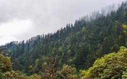 Annapurna trekking trail in Nepal. Pine tree forest at sunny day on Annapurna trekking trail in Nepal royalty free stock image