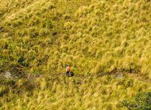 Annapurna Trekking Trail in Nepal. A young man walking on Annapurna Trekking Trail in Nepal stock image