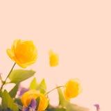 Annata del fiore e bello gialli Immagini Stock