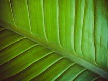 Annata di verde della foglia del fondo Fotografie Stock